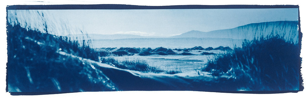 Layers of beauty // 47 // Original Cyanotype Print