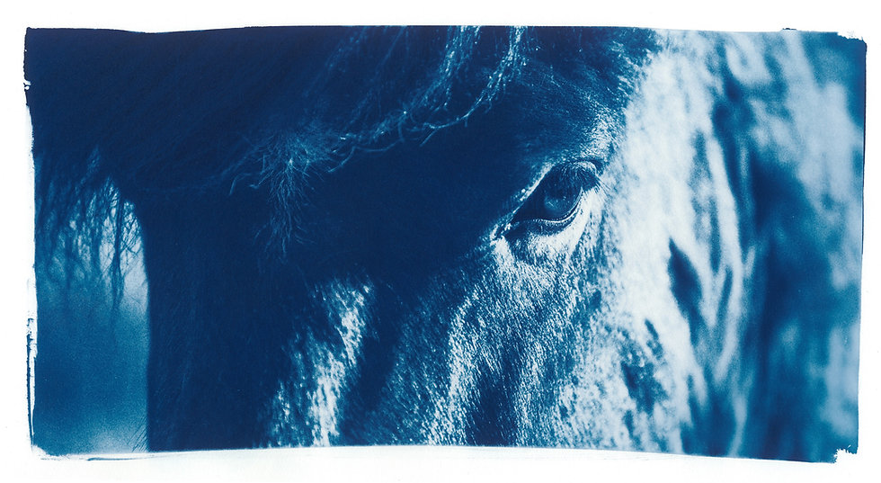 The eye // 19 // Original Cyanotype Print
