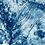 Thumbnail: Boiling land // 26 // Original Cyanotype Print