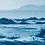 Thumbnail: Layers of beauty // 47 // Original Cyanotype Print