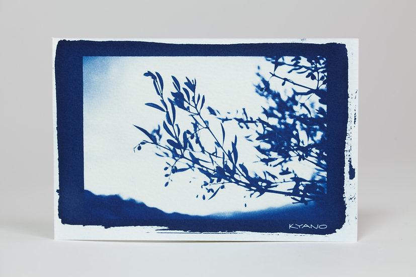 """Olivier"" cyanotype postcard"