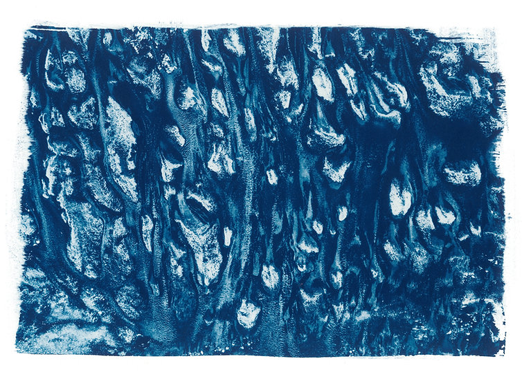 Texture // 17 // Original Cyanotype Print