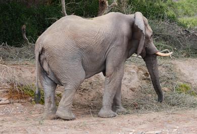 éléphant-DSC_1055.jpg