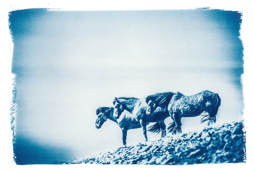 Listen to the wind // 49 // Original Cyanotype Print