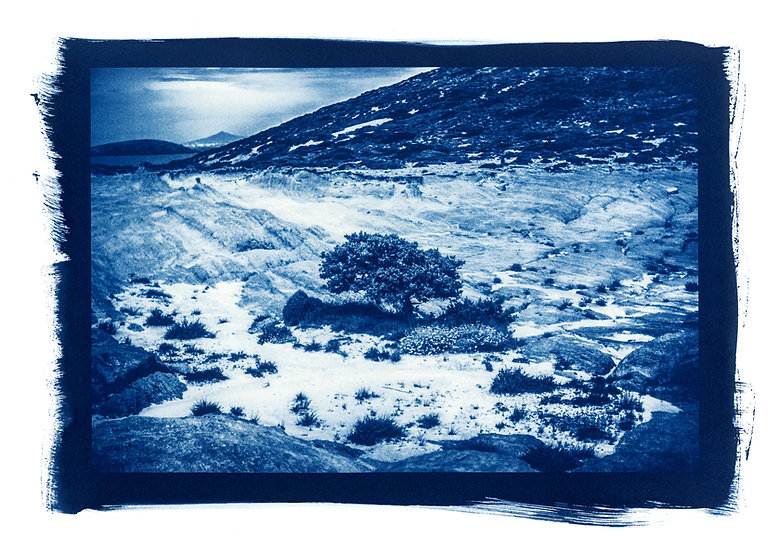 """"""" Powerful tree """" Cyanotype on Arches Platine Paper."""