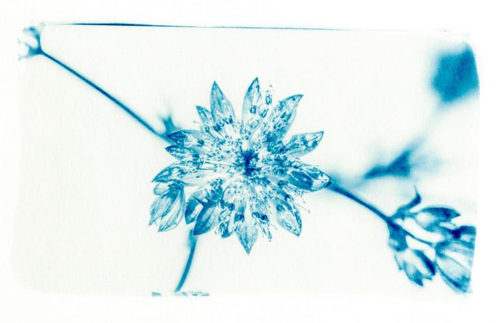 _Dora_plantes007.jpg