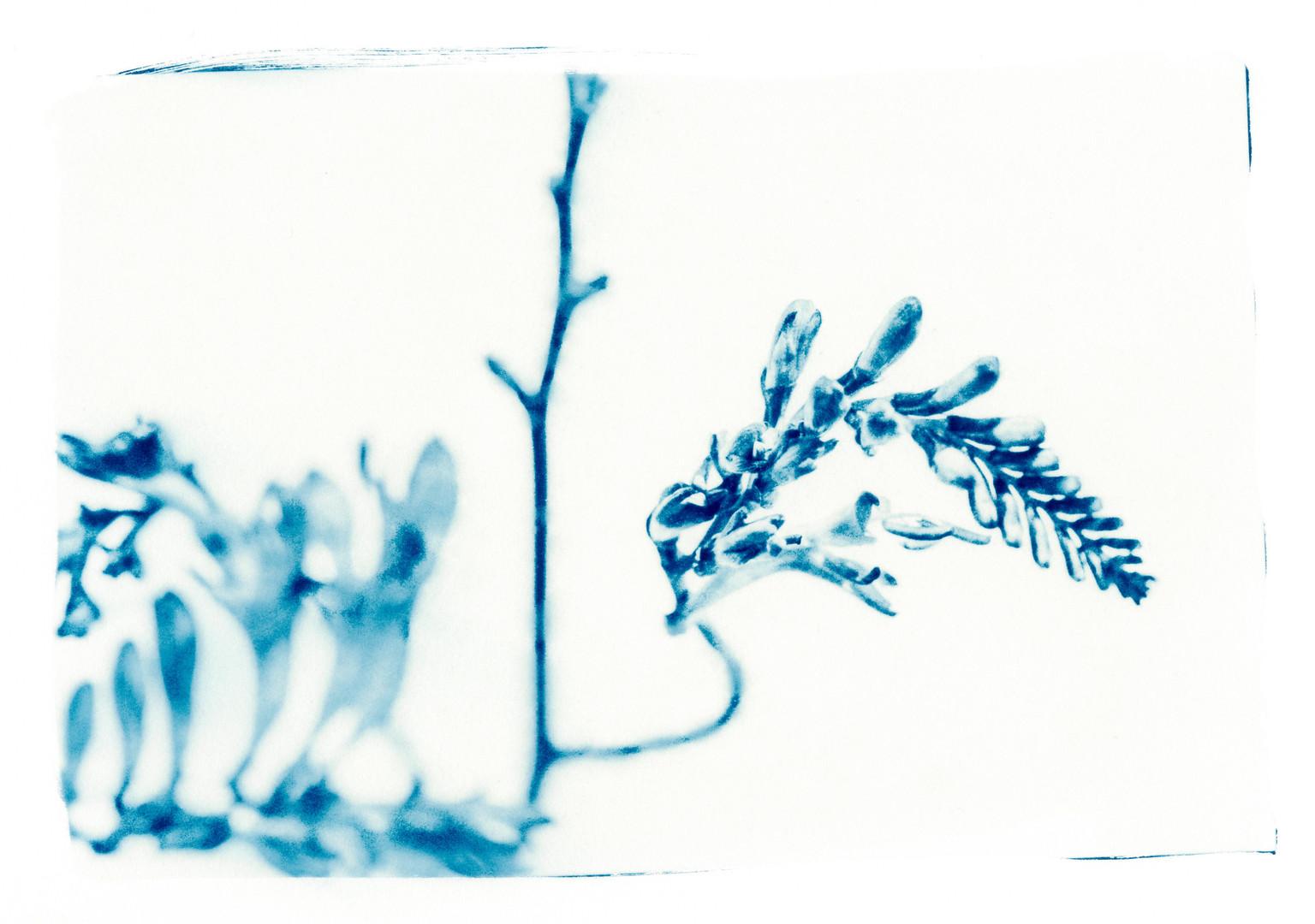 _Dora_plantes008.jpg