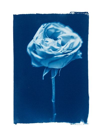 Bloom into joy //  Original Cyanotype