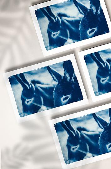 prints horizontal.jpg