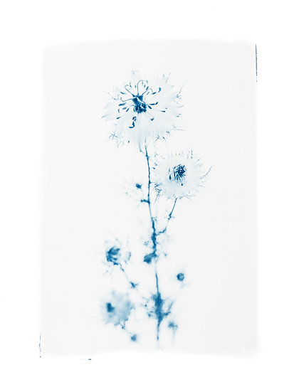 Fragile equilibrium //  Original Cyanotype
