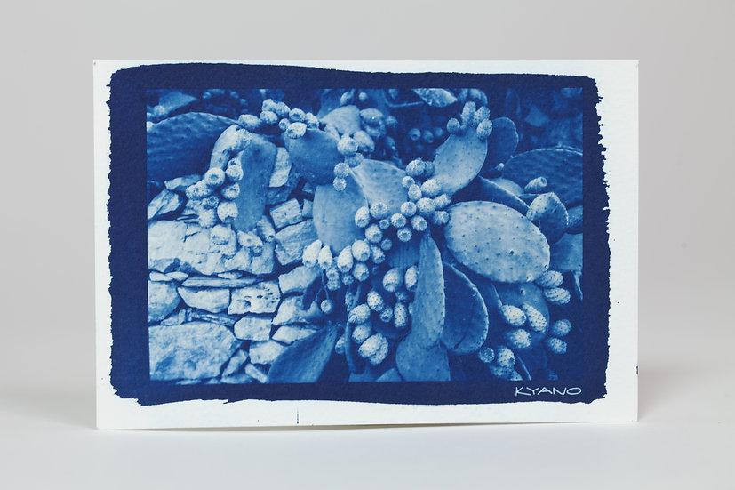 """Figues"" cyanotype postcard"