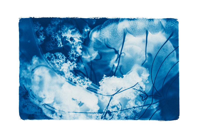 Rêveries Nomades // 8 //  Original Cyanotype