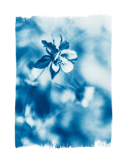 The garden of joy //  Original Cyanotype