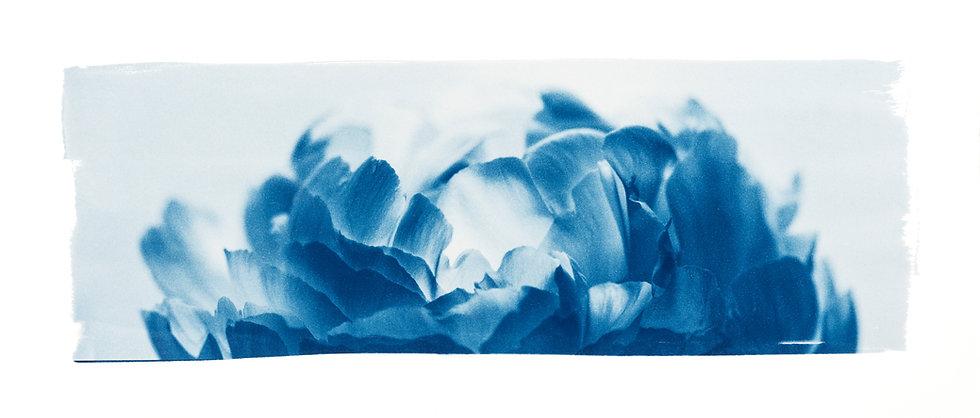 Cueillir ou Accueillir //  Original Cyanotype