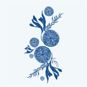 OUR BLUE PLANET PRESENTATION-34.png