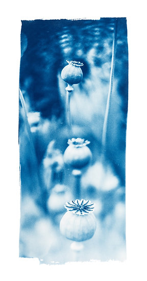 Never alone //  Original Cyanotype