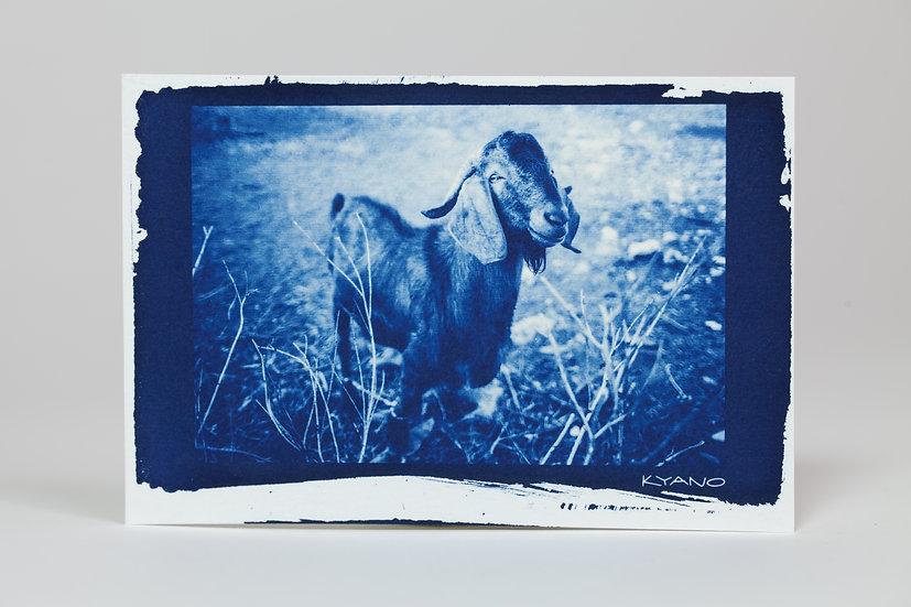 """""""Katsika"""" cyanotype postcard"""