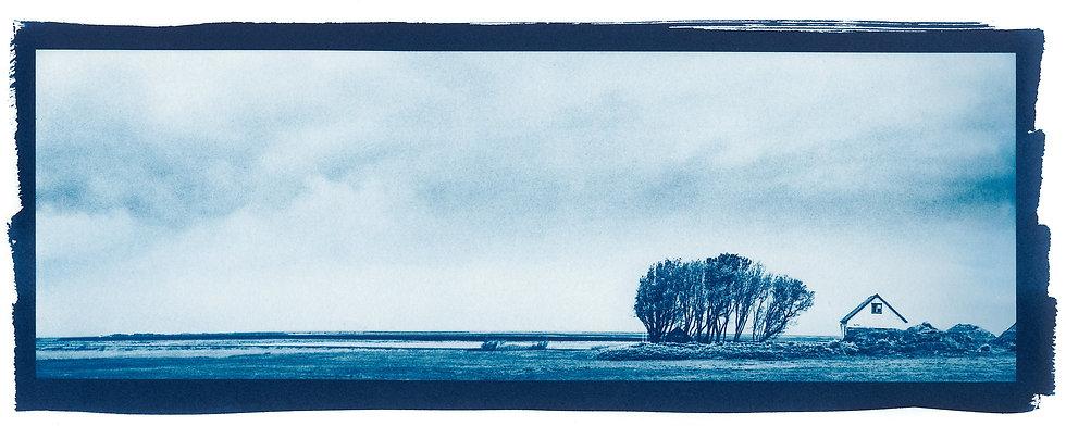 Home // 45 // Original Cyanotype Print