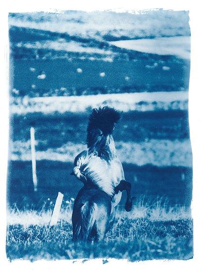 Wild Horses // 33 // Original Cyanotype Print
