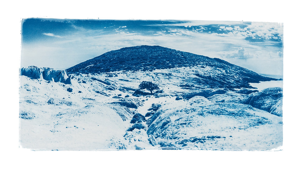 """Powerful tree Panoramic"" Cyanotype on Arches Platine Paper."