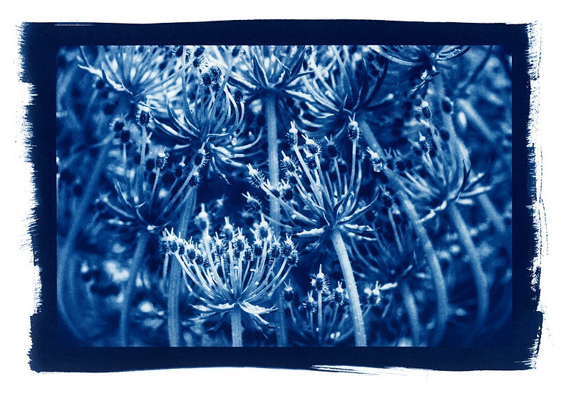 """ Bouquet"" Cyanotype on Arches Platine Paper."