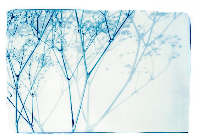 _Dora_plantes010.jpg