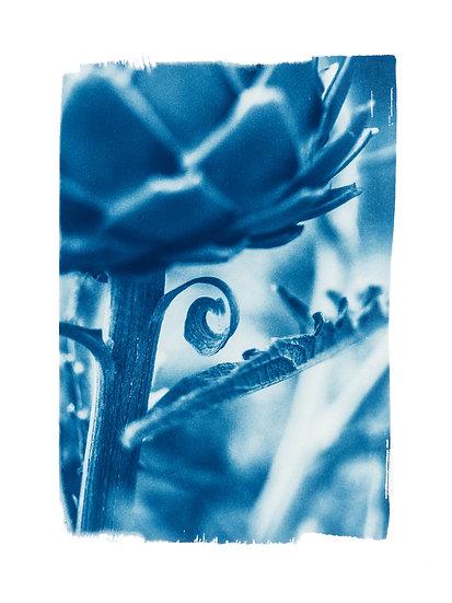 Dormant seeds //  Original Cyanotype