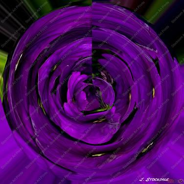 29. Petunia Swirl-001.jpg