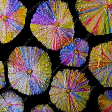 Acicular Gypsum Crystals ....20 x 16.jpg