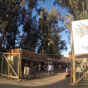 Naturaleza, artesanía y campo en Algarrobo