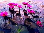 Lotus%2520am%2520Wasser_edited_edited.jp