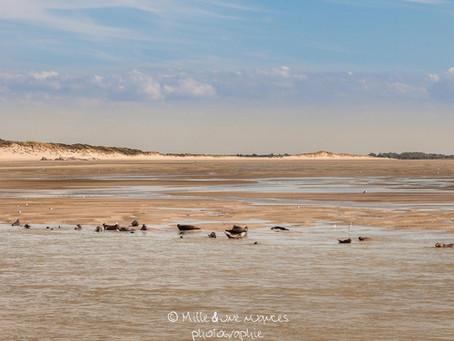Le littoral des Hauts de France (Ep2/2)      La baie d'Authie: Un territoire encore sauvage