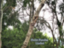 修樹3.jpg