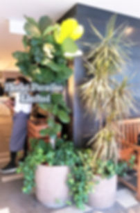 沙田餐廳3.jpg