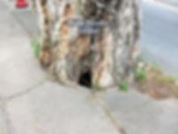 修樹1.jpg