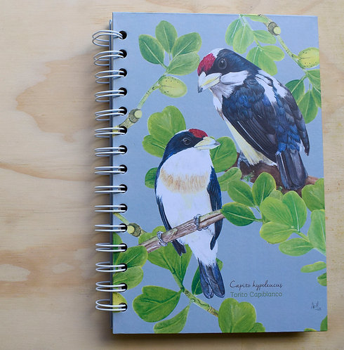 Aledesign + Cuaderno Torito Capiblanco