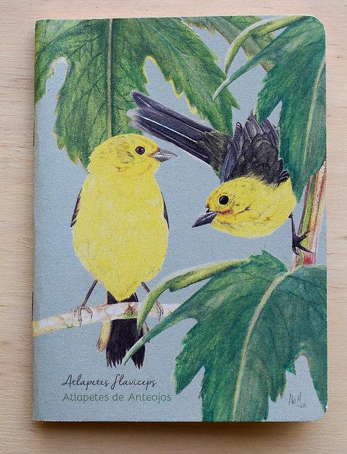 Aledesign + Libretas grapadas Aves