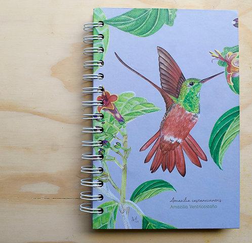 Aledesign + Cuaderno Colibrí ventricastaño