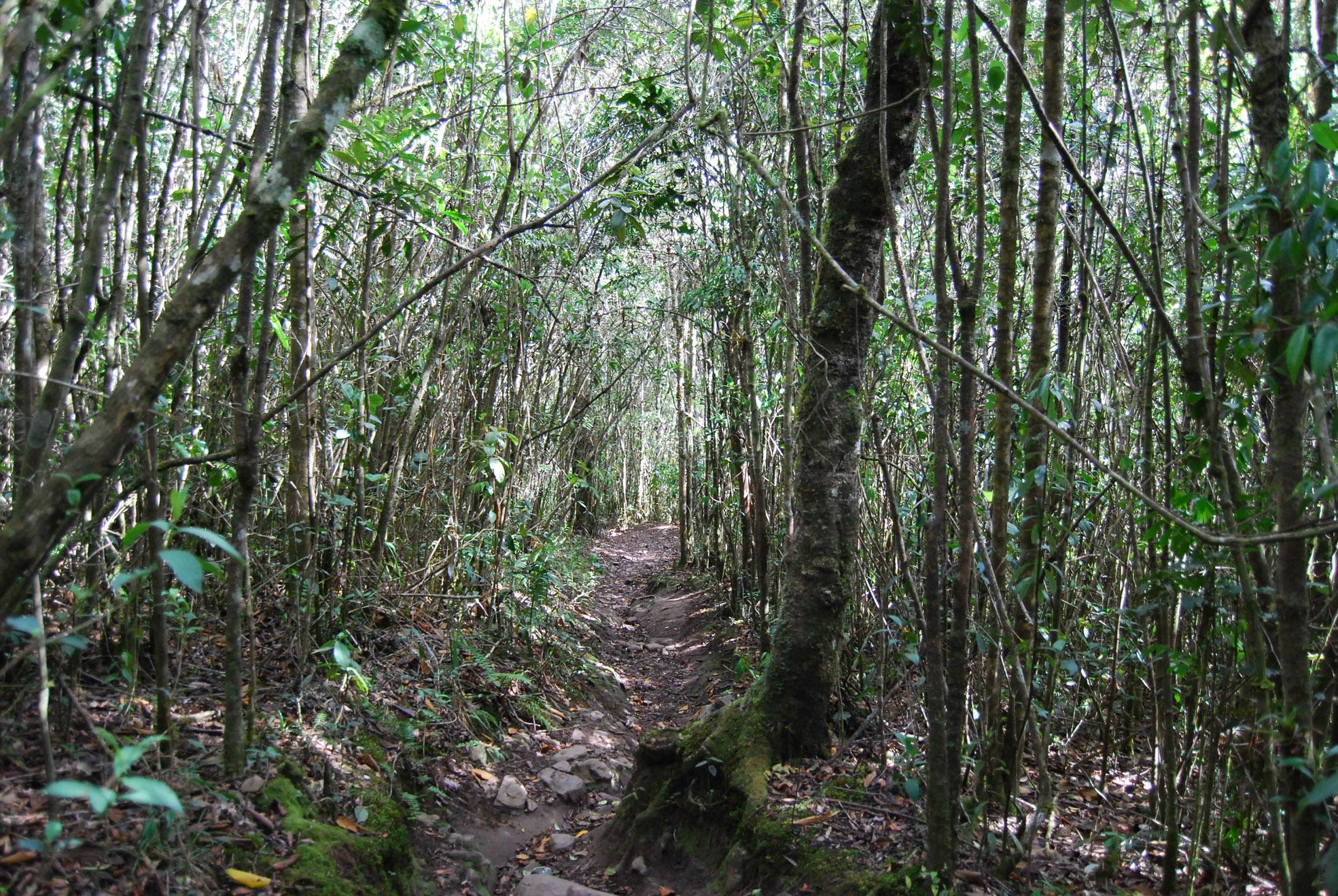 Iguaque