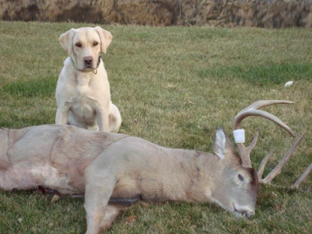 Deer Bow 2008 006