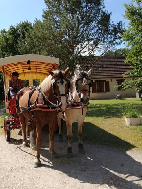 Balades en calèche à Selles-sur-Cher et en Sologne
