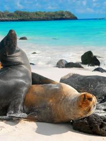 Galápagos - 6.jpg