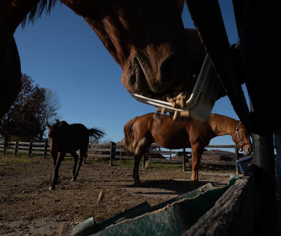 """Lena prides herself on the care that her horses receive. """"I have a 100-percent rate of getting the mares back in foal, which is really rare,"""" Lena says. """"We usually do 15 mares a season."""" At one point, the farm had 100 thoroughbreds on the property."""