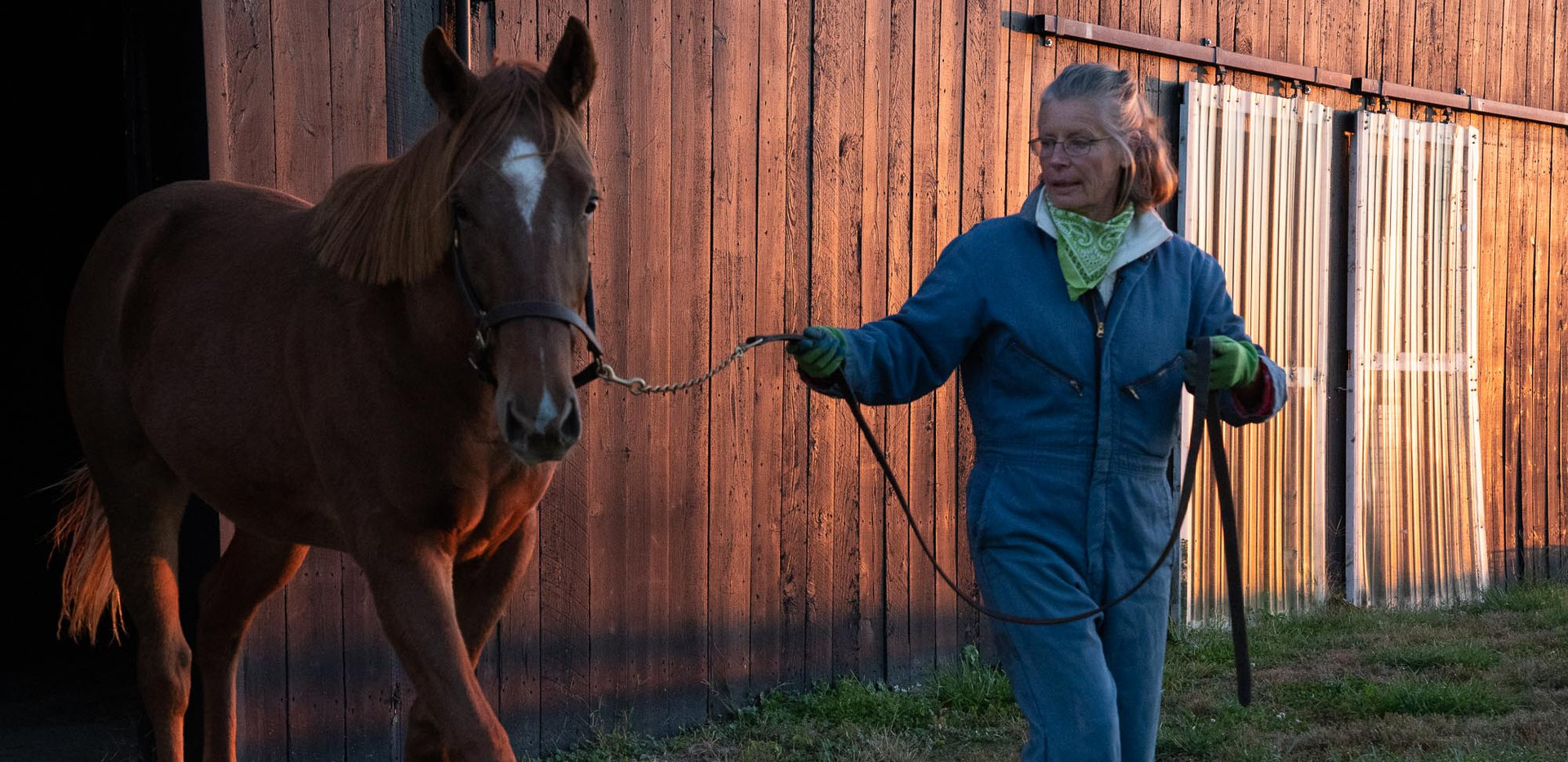 Lena raises thoroughbreds for clients located around the world. The yearling in this photo was shipped to Sweden.