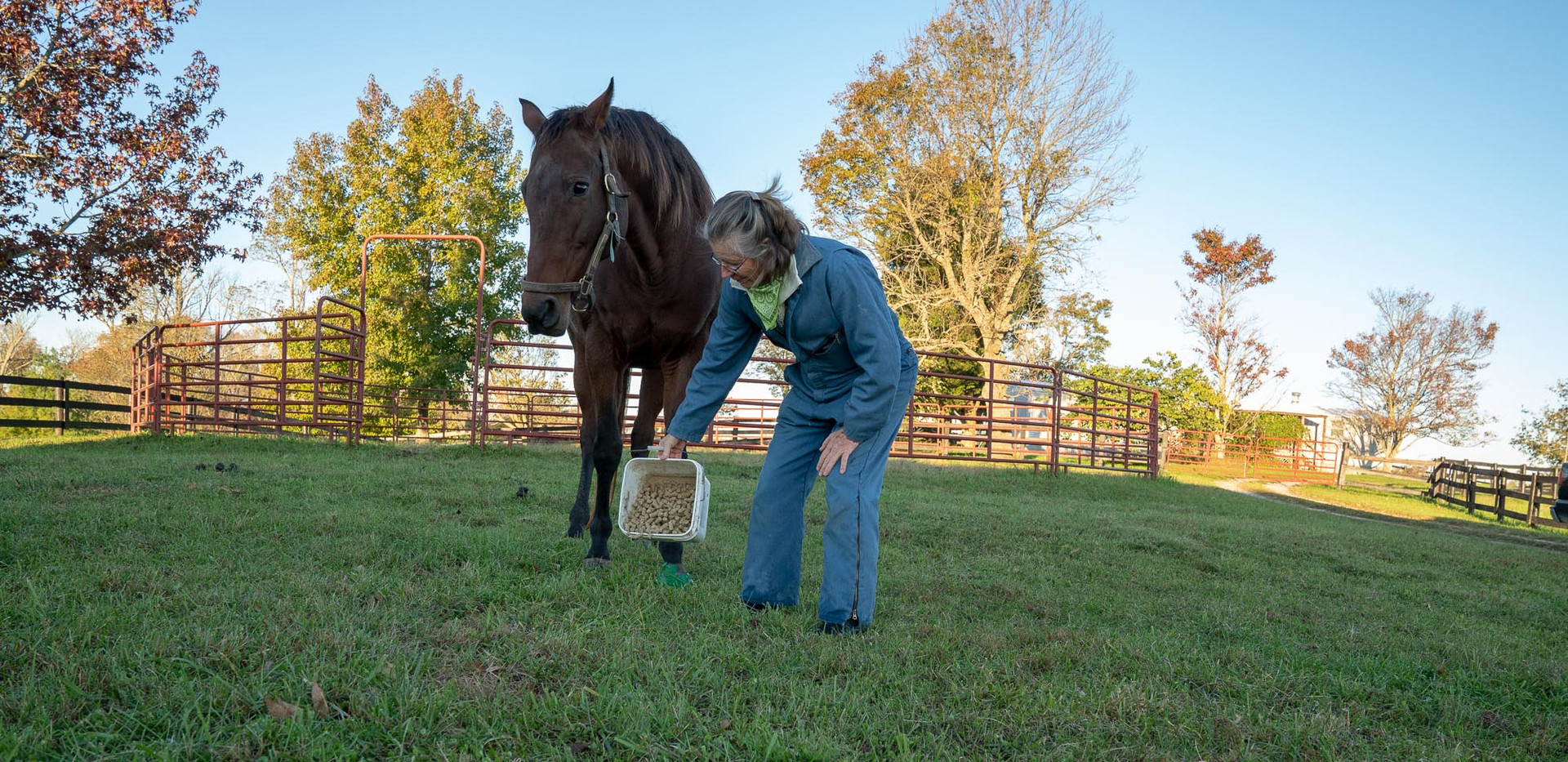 Lena gives special attention to one of her pregnant mare's with an injured hoof.