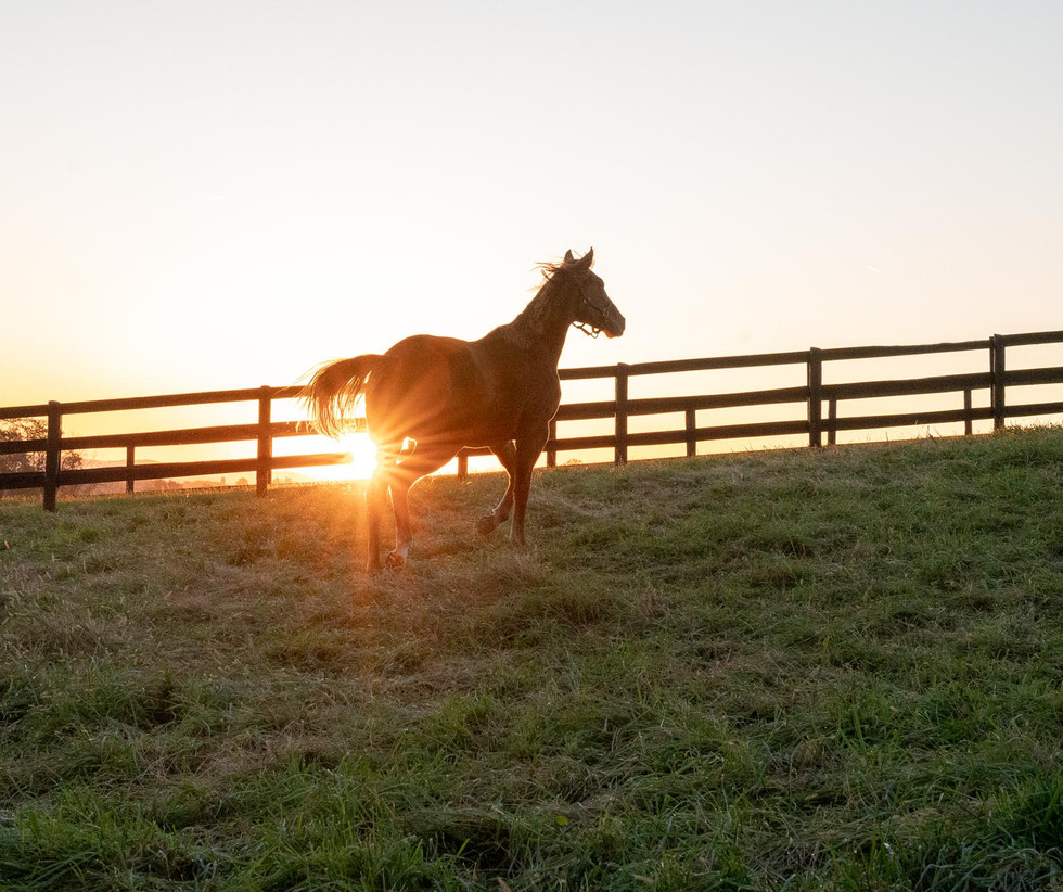 Hedberg Hall is a 221-acre thoroughbred breeding farm in Mt. Sterling, KY, located approximately an hour east of the horse capital of the world.
