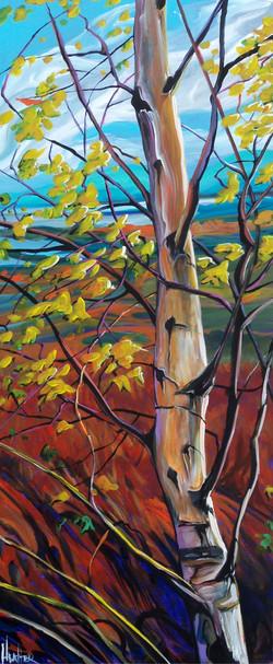 Windstruck Birch 16 x 40...SOLD