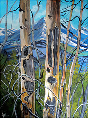 Spring Birch Bow Valley 30 x 40 SOLD