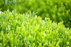 青葉の香り/含浸困難なナノクラス素材に「香り」を浸透する (自然多孔質素材:セラミック、石膏材、珪藻土類等) 細孔直径が3nm~7nmの含浸困難なナノクラス素材に香りを浸透する