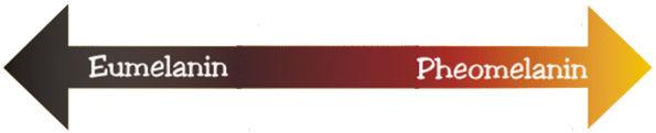 メラニンにはさまざまな種類があり、これらの色素の比率によってさまざまな髪の色が生成されます。  それらは遺伝的に決定されます。混合物は人によって異なるだけでなく、人の頭全体でも異なります。    ユーメラニン は、黒とブルネットの髪に優勢な暗い色素です。  ユーメラニンには2つの異なるタイプがあります(茶色のユーメラニンと黒いユーメラニン)。    他の色素がない状態での少量の茶色のユーメラニンは、あかるいブロンドの髪を引き起こします。  赤い髪の人は暗いユーメラニン色素を作ることができないので、皮膚は一般的に非常に青白く、日光にさらされると簡単に火傷します。